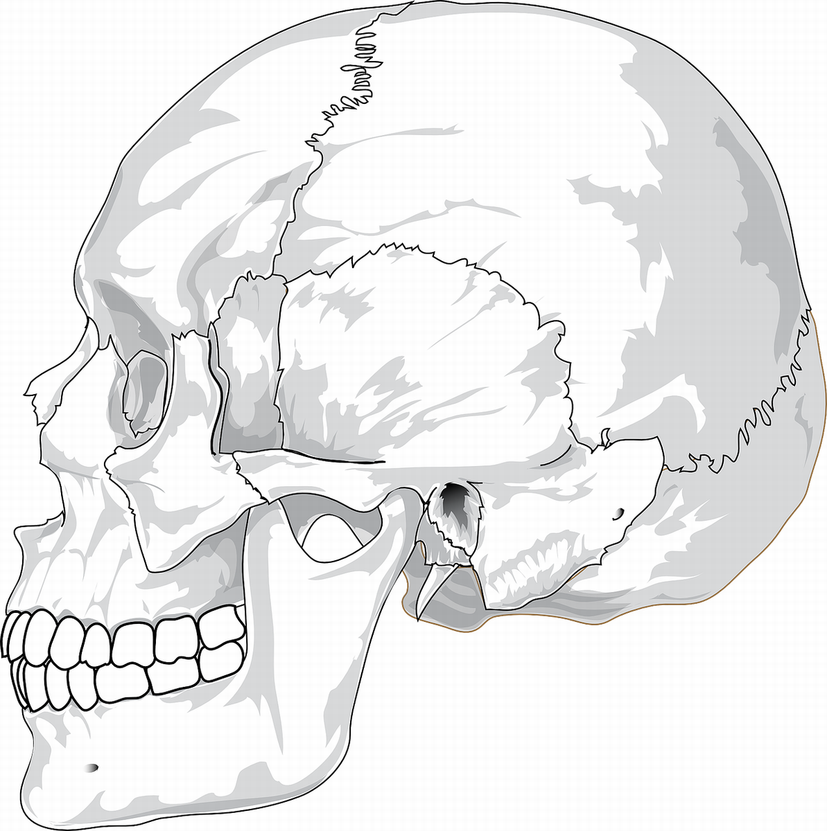 Beyond The Jaw And Mouth Atm Lessons For Those Suffering From Tmj